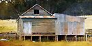 ~ The Old Shearing Shed ~ by Lynda Heins