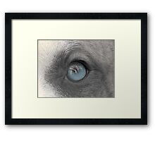 A Dogs Eye View - A Look Inside Framed Print