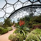Eden Project 2 by Simon Marsden