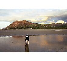 Indy at the beach at Sunset. Photographic Print