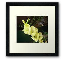 Goldie Glad Framed Print