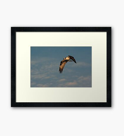 Osprey with Catch Framed Print