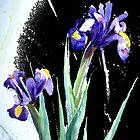 Iris by Rebecca Yoxall