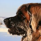 Cold Dog by AmyKippernes