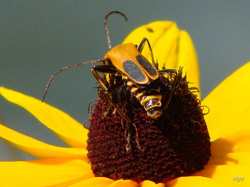 Backside of a Bug by vigor