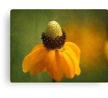 Cone Flower Canvas Print