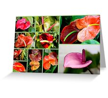 ANTHURIUM COLLECTION Greeting Card
