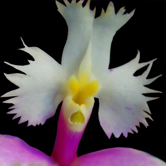 Beaker: Alien Discovery - A New Perspective on Orchid Life by © Ashley Edmonds Cooke