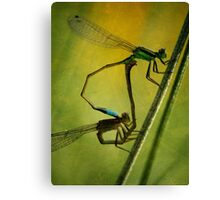 Damsel Flies Closeup Canvas Print