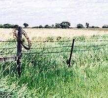 Barbwire in South Dakota by Glennis  Siverson
