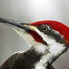 Pileated Woodpecker Portrait by Wayne Wood