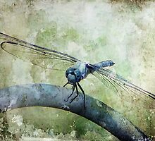 Dragonfly by DottieDees