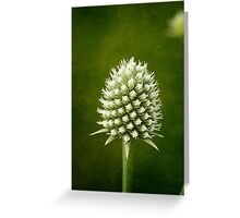 Button Snakeroot Abstract Greeting Card