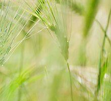 Green Barley by Skye Hohmann