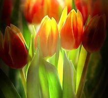 Tulips by RosiLorz