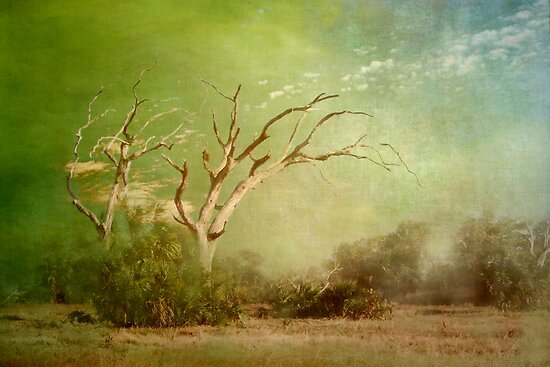 Misty Morning by enchantedImages