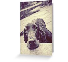 Young Irish Setter Dog Greeting Card