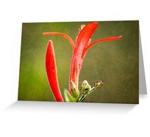 Skyrocket Closeup Abstract Greeting Card
