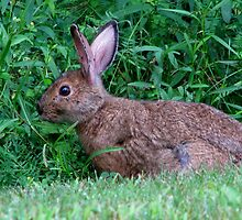 Rabbit ears by hummingbirds