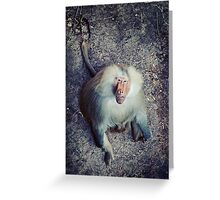 Male Hamadryas Baboon Greeting Card