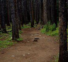 Path by DavidDArnold
