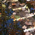 Leaves in water under a bridge by naturalgifts