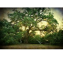 The Ruskin Oak Photographic Print