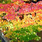 candy tree by naturalgifts