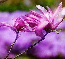 Purple Magnolia by Lynnette Peizer