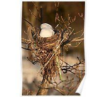 snow nest Poster