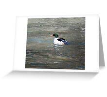 Male Common Merganser Greeting Card