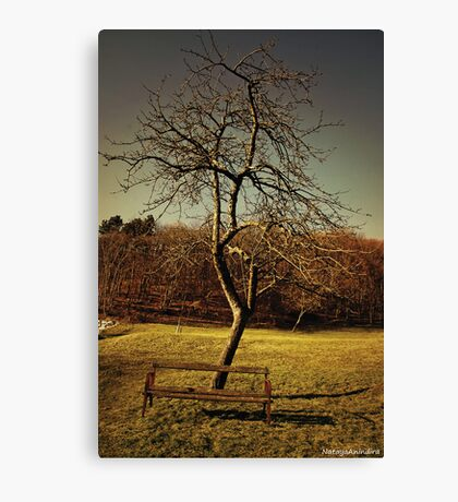 wood, green, and rusted metal 1 Canvas Print
