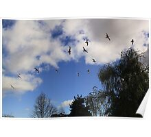 Birds Flying High, You Know How I Feel.... Poster