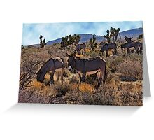 Desert Burros Greeting Card