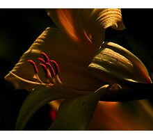 Lilly Fuego Photographic Print