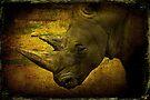 Rhino by Chris Lord
