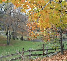 fall meadow by naturalgifts
