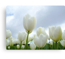 Field of White Canvas Print