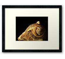 Mystery Shell Framed Print