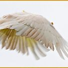 Flying Cockatoo by Susan Kelly