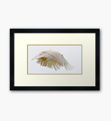 Flying Cockatoo Framed Print