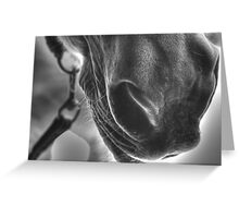 Muzzle Greeting Card