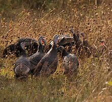 Turkeys in the Straw - Oxford Mills, Ontario by Stephen Stephen