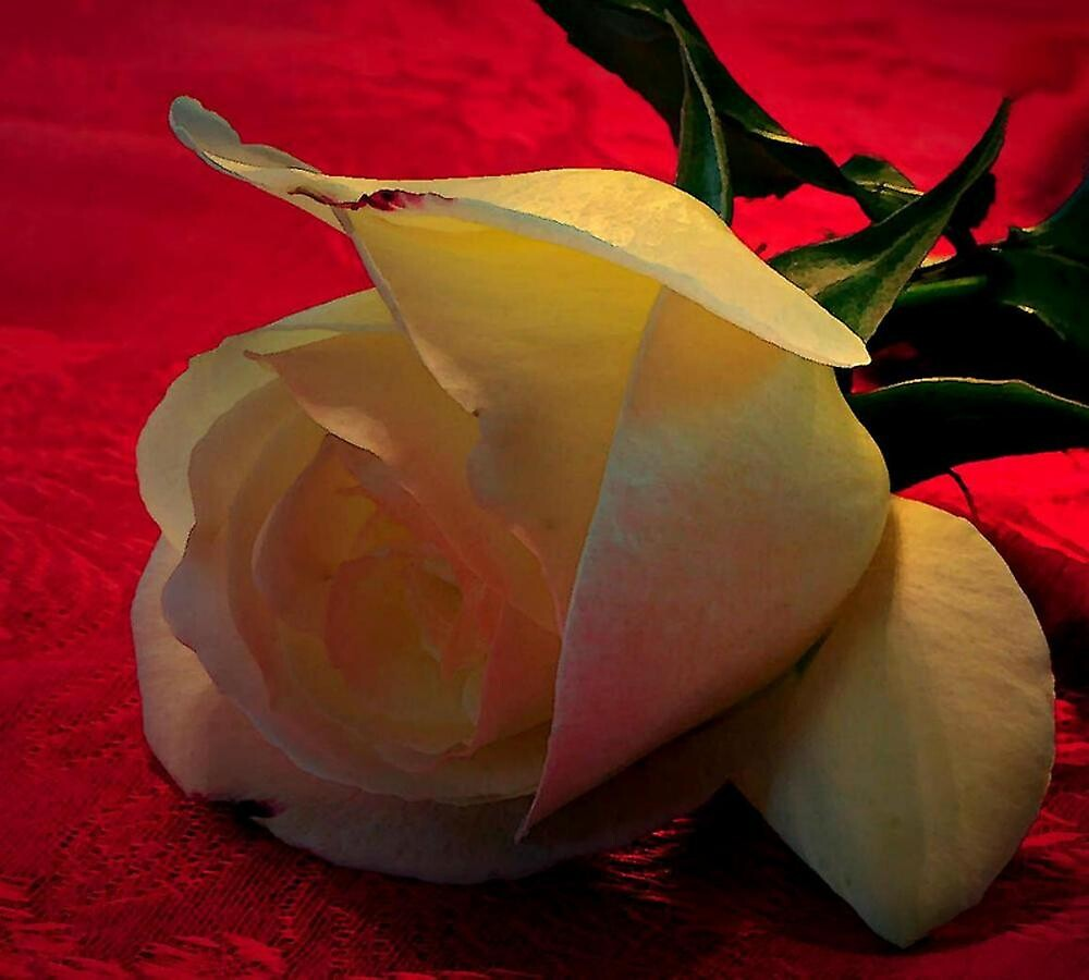 _ROSE_ by RoseMarie747