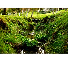 Tiny Grass Valley Photographic Print