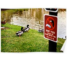 Don't Feed the Ducks Poster