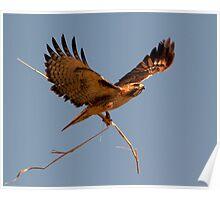 Nest Builder ll Poster