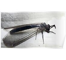 Antlion Lacewing Insect Poster