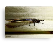 Antlion Lacewing Insect ~ 2 Canvas Print