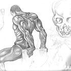 The Human Body by birchk